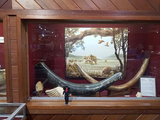 Brazosport Museum of Natural Science