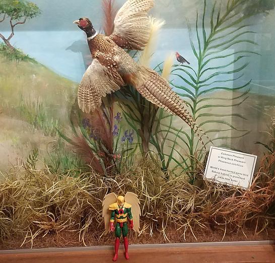 Hawkman at Brazosport Museum Of Natural Science