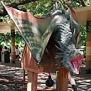 TXU Energy Presents Dragons at the Houston Zoo 24 Wyvern